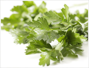 The Muranaka Italian Parsley